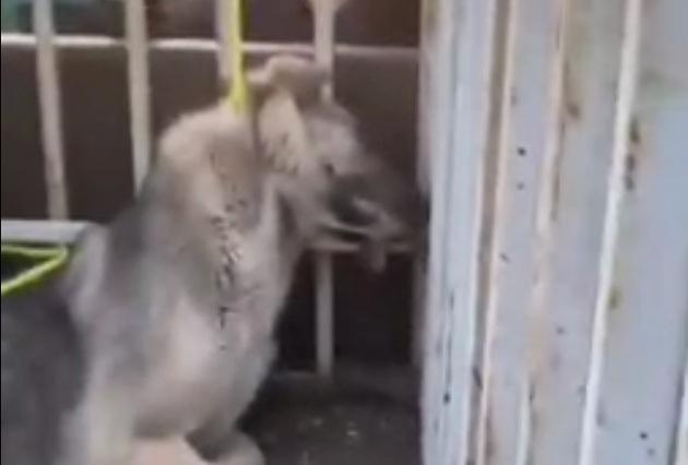 دار زدن و کشتن سگ ها در تبریز