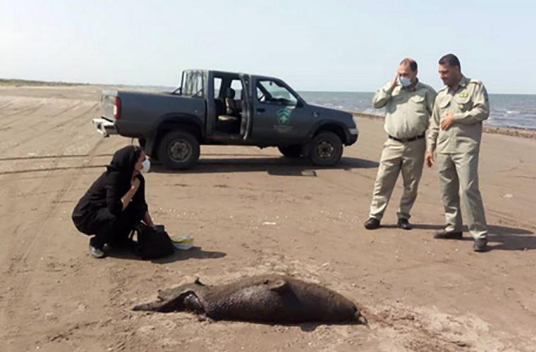 عکس صحنه دلخراش در ساحل کیاشهر